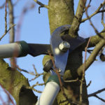 Tree Service for Your Garden