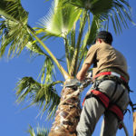 Reasons to Find a Professional Tree Trimming Service in Phoenix