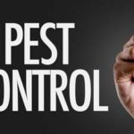 Bed Bug Extermination Goodyear | Tips For Choosing